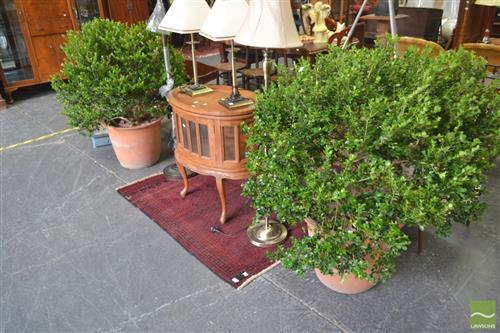 Pair of Buxus Hedging Plants