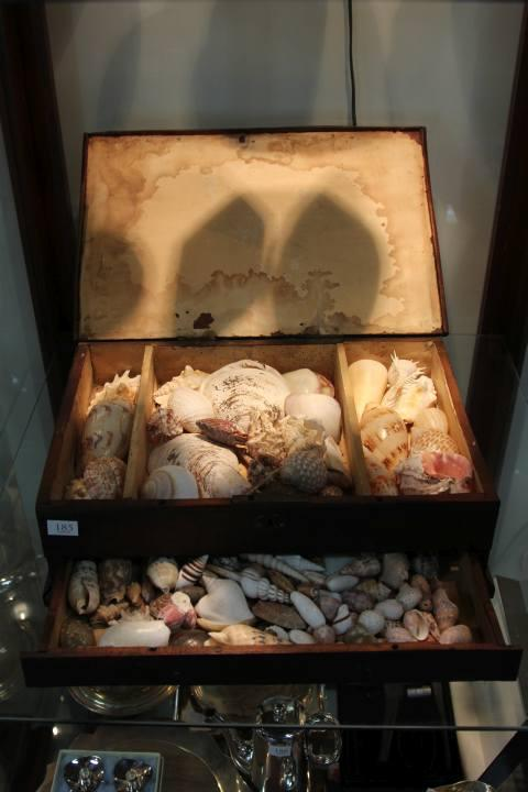 Timber Chest of Various Sea Shells