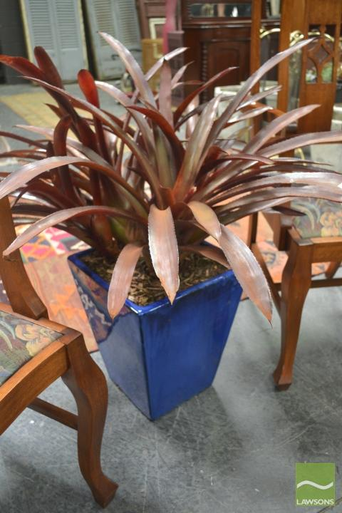 Red Bromeliad in Blue Glazed Ceramic Pot