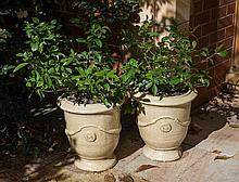 Pair of Potted Plants
