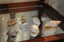 Various Vintage Sea Shells