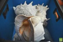 Box of Sea Shells