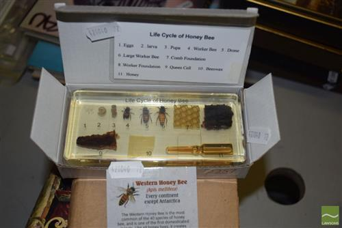 Preserved Honey Bee Cycle
