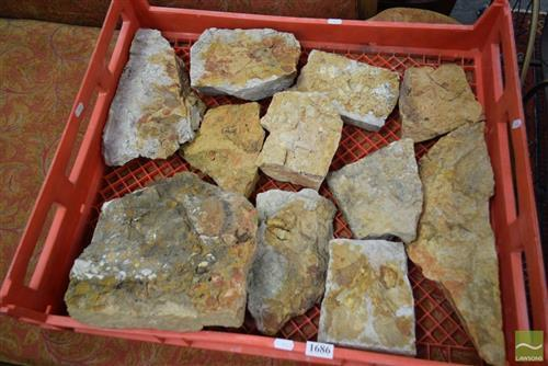 Crate of Fossil Bryszoans & Molusks ECT