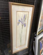 """Susan Cadby """"Iris, 1987"""" watercolour (AF) 71 x 32cm signed and dated"""