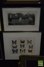 M. Hingerty (2 works), Butterfly Collection I; Waterbirds, hand-coloured etching; etching and aquatint, each editioned, 55 x 68.5cm;...