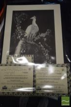 Lionel Lindsay, Quantity of (10) facsimile etchings, 'Morning Glory' (5) & 'The White Peacock' (5) (each with certificate)