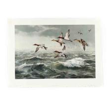 Maynard Reece (IA, 1920-2020), Rough Water - Canvasbacks