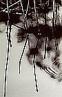 Ray Charles White, Glass Disturtant,