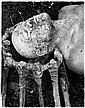 DIETER APPELT Niemegk 1935 OHNE TITEL (AUS DER, Dieter Appelt, Click for value