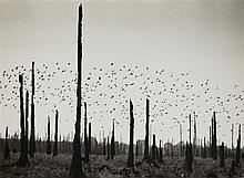 Theo Felten, Leben im toten Wald (Hürtgenwald), 1945/46