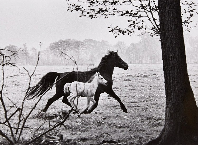 Peter Thomann, Stute mit Fohlen (Mare with Foal), 1963