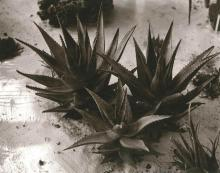 Will Wegener, St. Louis, Five Still Life Photos, Black and white silver gelatin prints, 10 inches x 5 1/4 inches, 7 7/8 inches x 8 1...