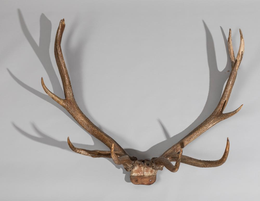 Late19th-early 20th Century Large Elk Horn Mount