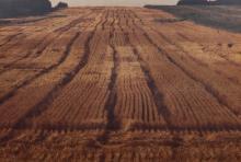 Larry Stark, American, 20th century, Wheat Field,, screenprint on canvas, 39 x 58 inches