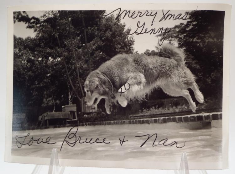 Bruce Weber, Am., b. 1946, Hand-Signed Dog Cards