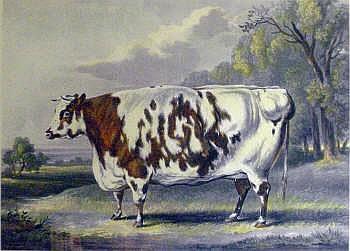 JOHN HARRIS (1811-1865), after William B Davis