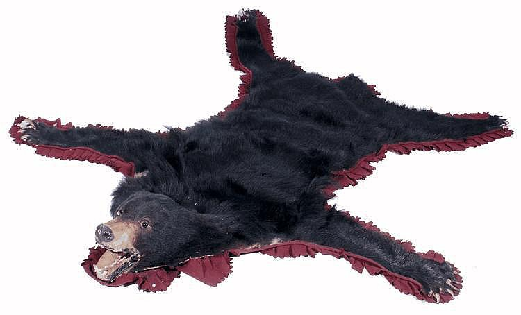 A PRESERVED AND MOUNTED SKIN of a bear with head,