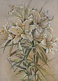 MARIE HENSLEY (c.1856-1911) White lilies,, Marie Hensley, Click for value