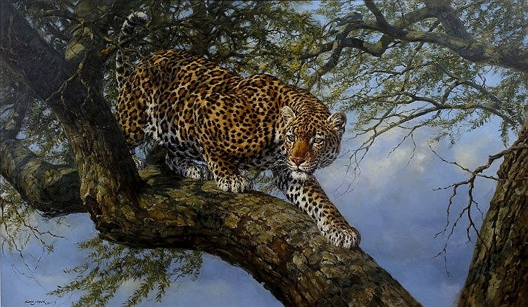 FREDERICK J. HAYCOCK (b. 1948) A prowling leopard, signed and dated '9