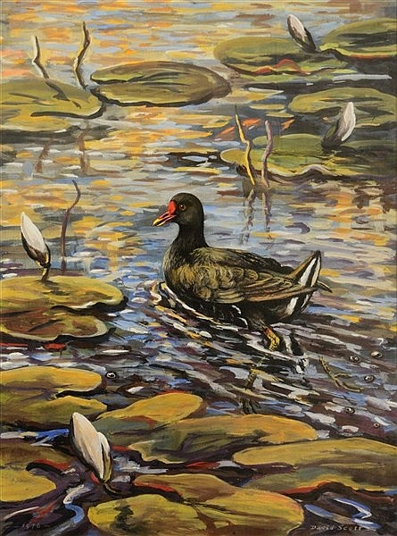DAVID SCOTT (20TH CENTURY) 'The Moor Hen', signed and dated 1976, wate