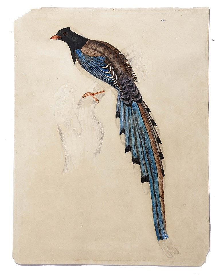 CIRCLE OF ELIZABETH GOULD (1804-1841) An exotic bird perched on a tree
