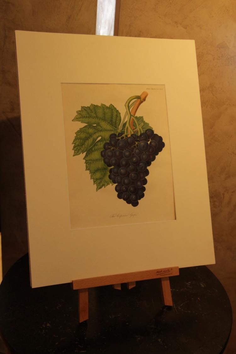 Original Botanical etching (one)