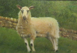 Original oil painting by Canadian artist Brian Darcy - Sheep Hill