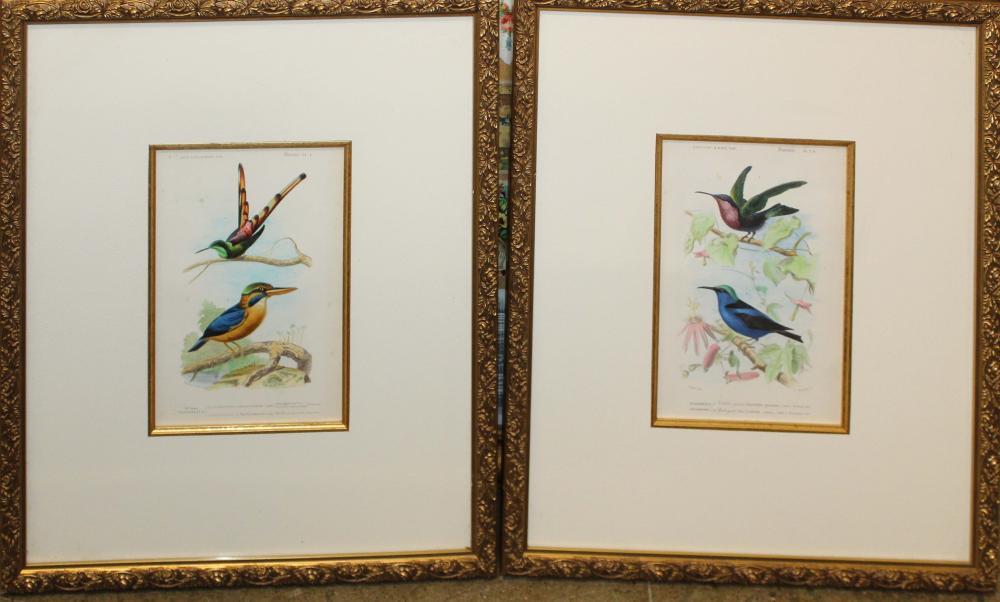 Pair of Fournier bird prints in matching gilt frames