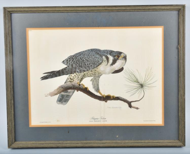TOM DUNNINGTON SIGNED PEREGRINE FALCON PRINT