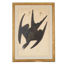 After John James Audubon, Havell edition print