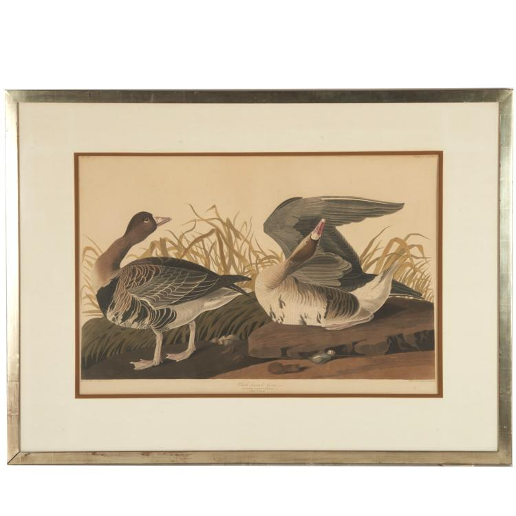 After John James Audubon, Havell edition print
