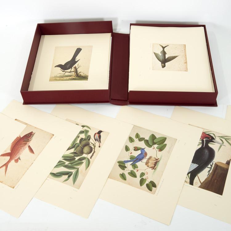 Mark Catesby, III Vol. Natural History Watercolors