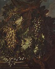 Tommaso Realfonso, detto Masillo (Napoli 1677 circa - post 1743)  Tralci di uve bianche e nere en plein air