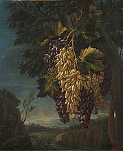 Tommaso Realfonso detto Masillo (Napoli 1677 circa - post 1743)  Tralci di uve bianche e nere en plein air