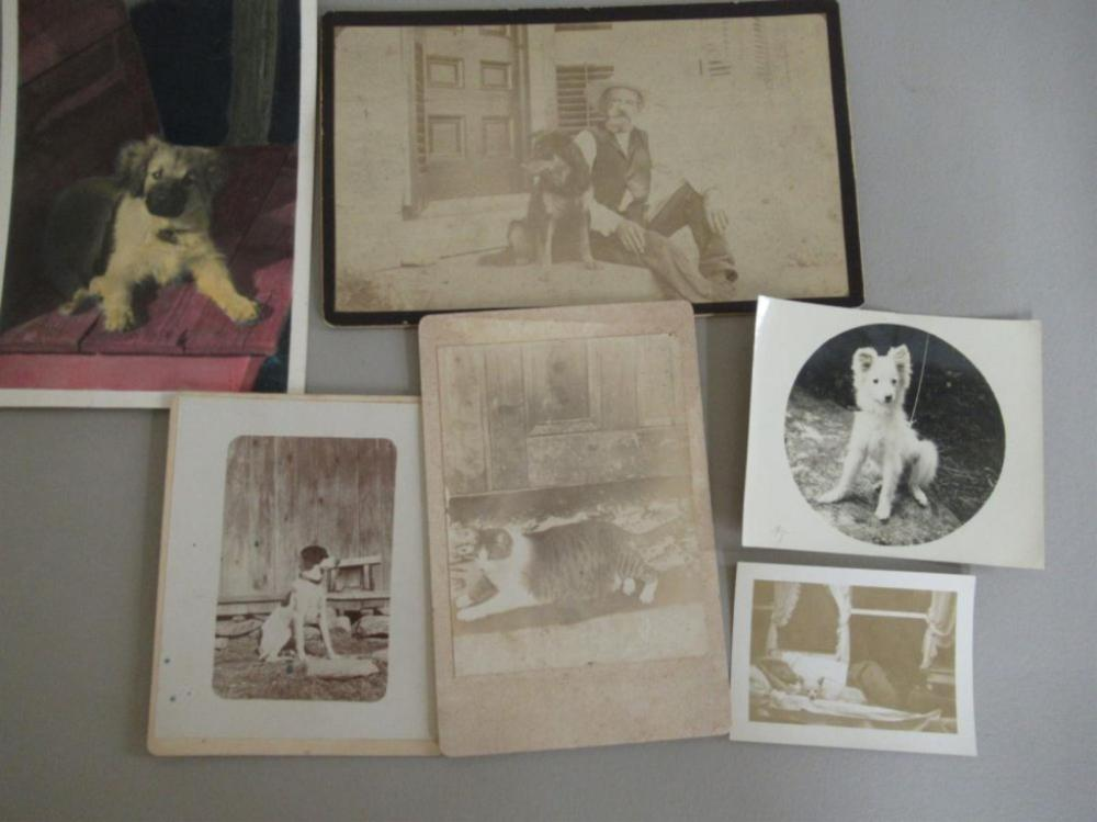 6 Vintage Photos Dogs and Cat