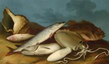 École Italienne du XVIIIe siècle   Natures mortes aux poissons, coquillages et corail   Paire d'huiles sur toile en pendant rentoilées   45 x 73,5 cm