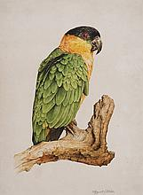 AUGUSTE PELLETIER (1816-1846)