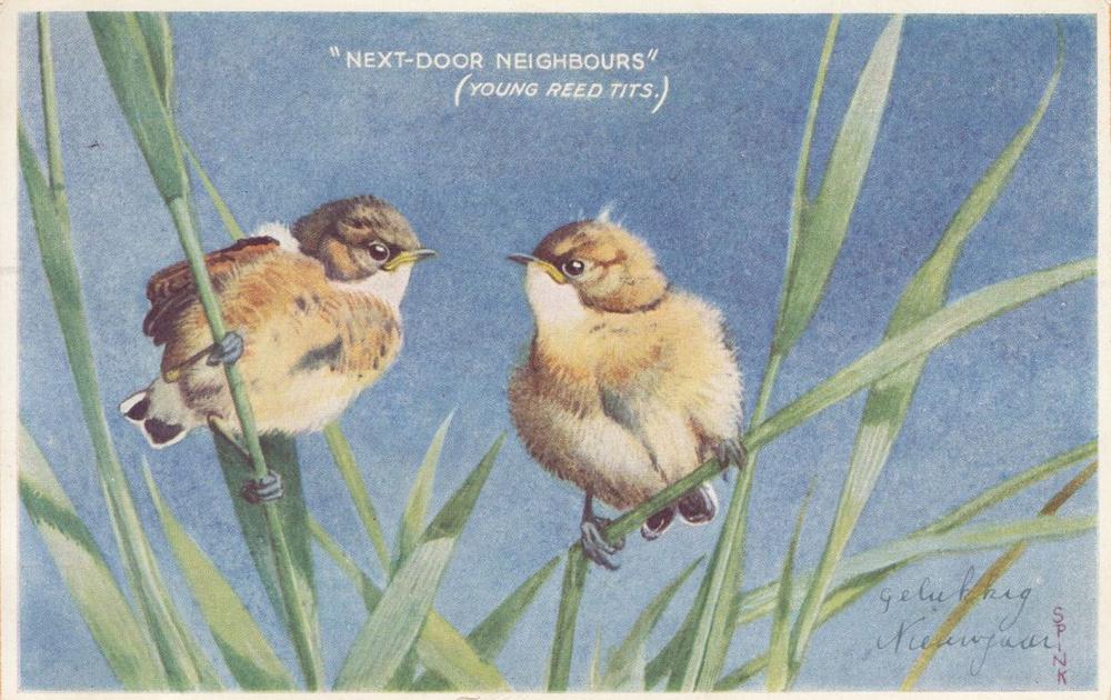 OISEAUX. Ensemble 165 cartes postales d'oiseaux.