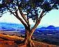 Salas Portugal, Armando. Vistas de los Volcanes y Paisaje con Árbol.  Fotografías en color, 20 x 25 cm. Piezas: 3.