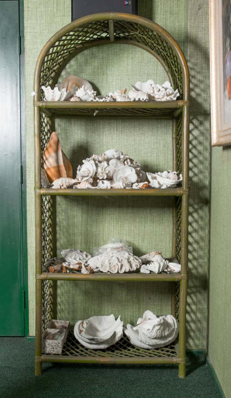 A Collection Of Various Seashells On A Four Shelf Display St