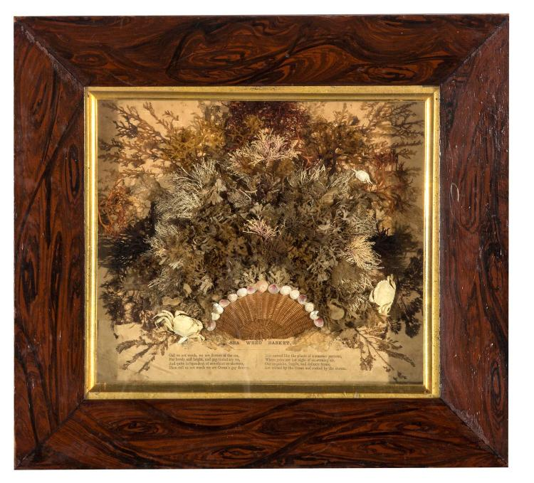 A Victorian seaweed picture, faux Brazilian rosewood frame, English, 19th century