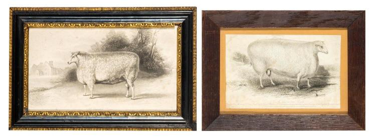Two framed engravings of sheep, English, 19th century