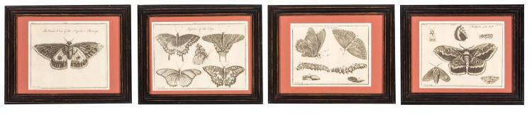 A set of four butterfly prints, English, 19th century