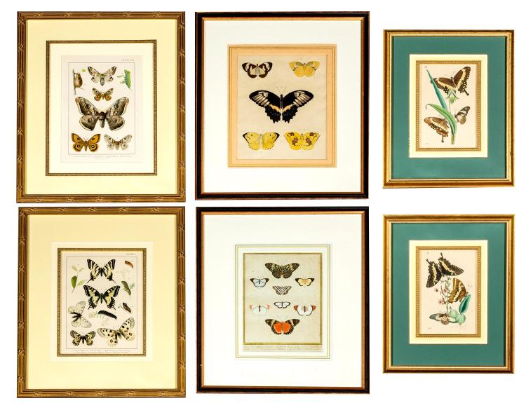 A collection of six butterfly engravings, English, 19th century