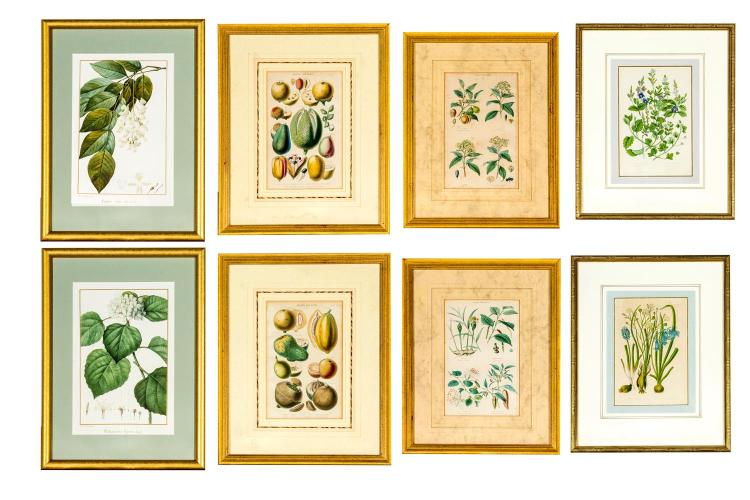 A collection of eight botanical prints