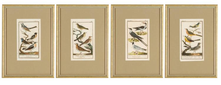 A set of four framed engravings of birds, English, 19th century