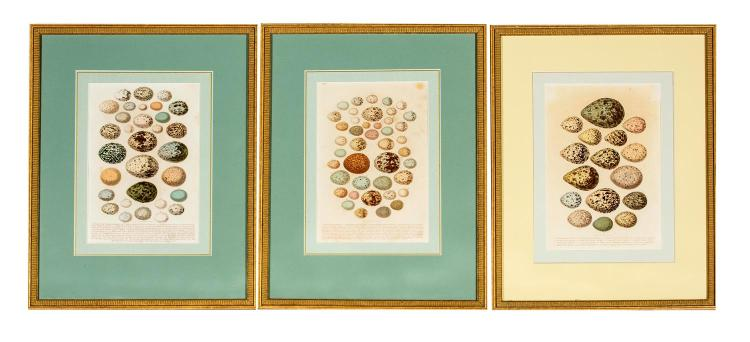A set of three framed bird's eggs prints