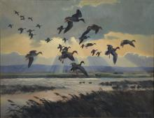 Peter Markham Scott (1909-1989), oil on canvas, Ducks Coming in with Sun Shining Through Clouds, signed lower right: Peter Scott 195...