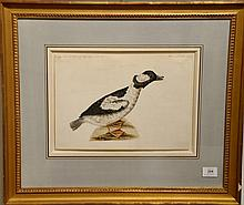 Attributed to Sarah Stone (1760-1844)  two watercolors  Buffel Headed Duck  and  King Idler Drake Duck  both unsigned  b...